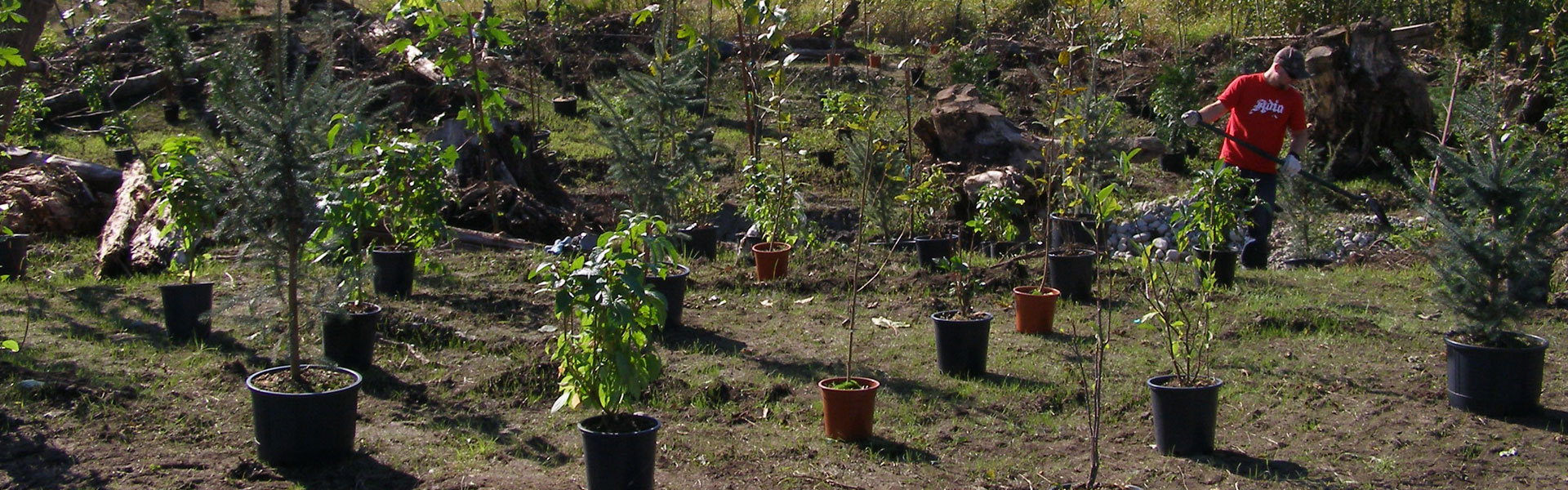 riparian_planting_1